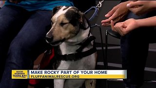 Rescues in Action: Rocky