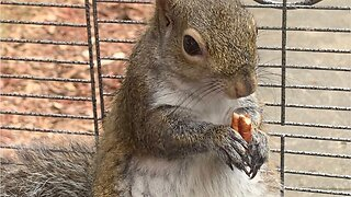 Man gave meth to 'attack squirrel'