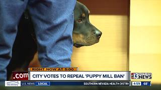 Las Vegas City Council votes to repeal 'Puppy Mill Ban' - Video
