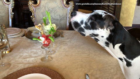 Polite Great Dane Inspects Watermelon Feta Salad Martini Dinner Glasses