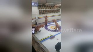 T-Rex curling: Just another Friday night in Canada - Video