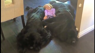 Little girl lies on her dream bed of giant puppies