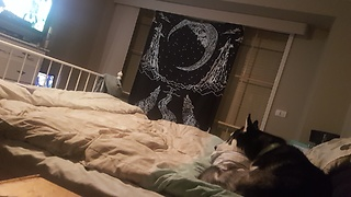 Husky loves watching David Attenborough - Video