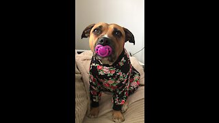 Pajama-wearing pup sucks on her pacifier