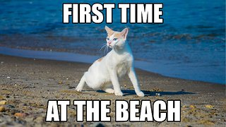 Chapy cat's First Time at the Beach - Video