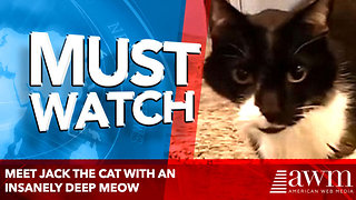 Meet Jack the cat with an insanely deep meow - Video