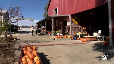 Bloom Where You're Planted Farm offers traditional farm fun, smaller crowd