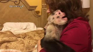 Capuchin Monkeys Scream In Excitement Upon Grandma's Return - Video