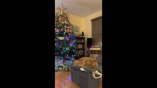 Cute cat hanging out by Christmas tree