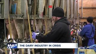 Dairy farms in crisis