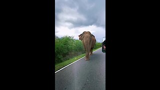 Elephant casually cruises along the road in Sri Lanka