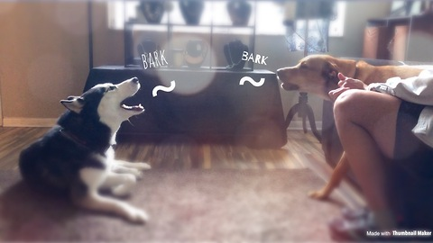 Dogs get into heated argument over absolutely nothing
