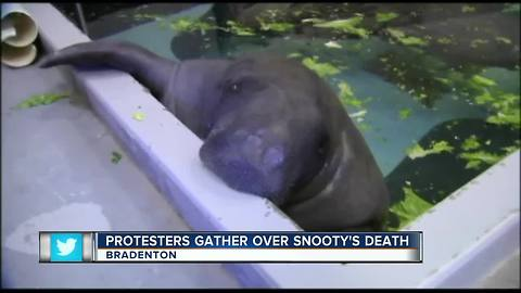 Protesters Gather Over Snooty's Death