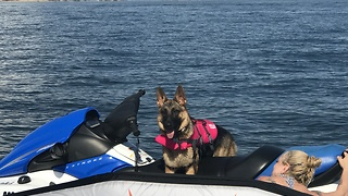 German Shepherd puppy loves riding jet skis - Video