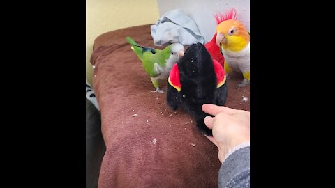 Parrots beat up on new bird toy