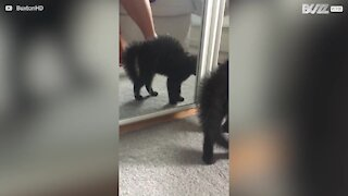 Kitty bristles with fright at her own reflection