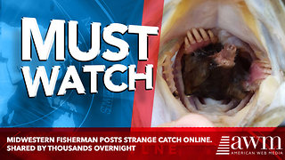 Midwestern Fisherman Posts Strange Catch Online. Shared By Thousands Overnight - Video