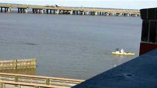 Alligator Chases a Kayaker in Mobile Bay, Alabama - Video