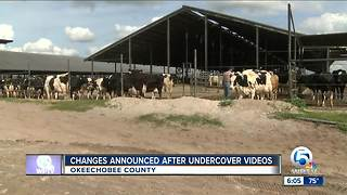 Changes announced after undercover videos at dairy farm - Video