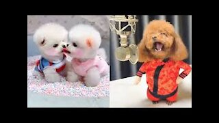 Cute Puppies 😍 Cute Funny and Smart Dogs Compilation #8 | Cute Buddy