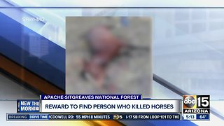 Wild horses shot, killed in Apache-Sitgreaves National Forest