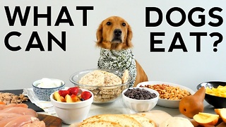 What can dogs eat? - Video