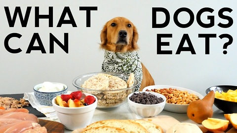 What can dogs eat?