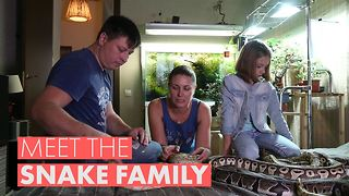 Would you let 40 snakes roam around your house? - Video