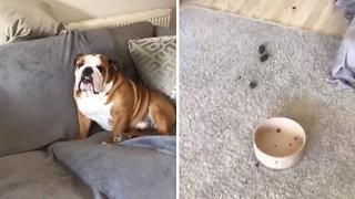 Mind the crap: Dog poops all over living room