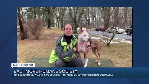 Luna the dog is looking for a new home at the Baltimore Humane Society