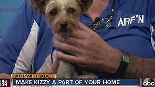 Say hi to Kizzy, our Nov. 27 Rescues in Action star - Video