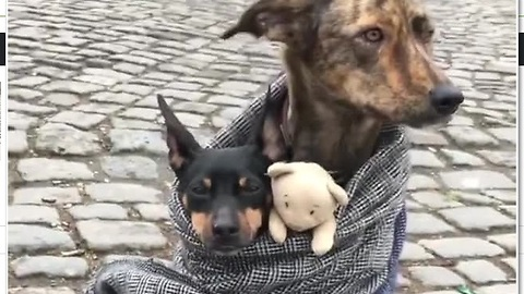 Dogs cuddle in front of majestic German castle