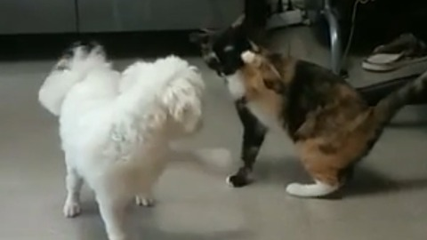 Dog desperate to play with uninterested cat