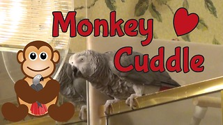 "Einstein parrot wants to ""monkey cuddle"""
