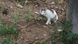 SOUTH AFRICA - Durban - Cat plays with a snake (Videos) (Yua)