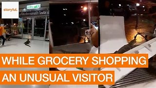 Monitor Lizard Scares Customers at Thai Grocery Store - Video