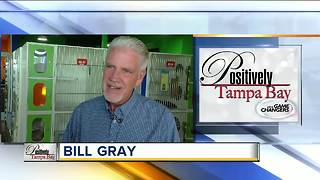Positivey Tampa Bay Game Changer: Bill Gray - Video