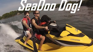 Dog loves to go on jet ski rides - Video