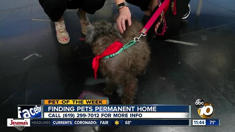 Pet of the Week: Calli