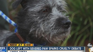 Dog left with severed paw sparks cruelty debate - Video