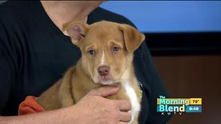 Nebraska Humane Society - Video