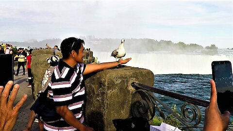 Friendly seagull steals the show at Niagara Falls