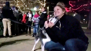 Cute Siberian Husky Max Wishes Everyone a Happy Holidays! - Video