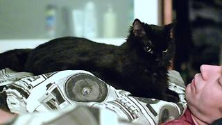 Persistent cat wakes up owner every morning - Video