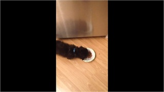 Confused puppy unsure how food bowl works - Video