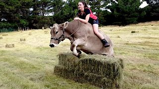 Teen Wanted A Pony, So She Taught The Family's Dairy Cow To Showjump - Video