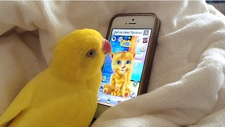 Parrot engages in deep conversation with popular talking app - Video