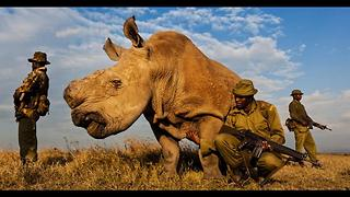 Sudan: The Last Northern White Rhino in the World - Video