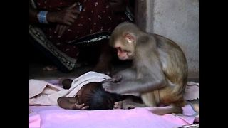 Monkey Babysitter - Video