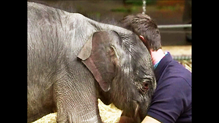 Baby Elephant Miracle - Video